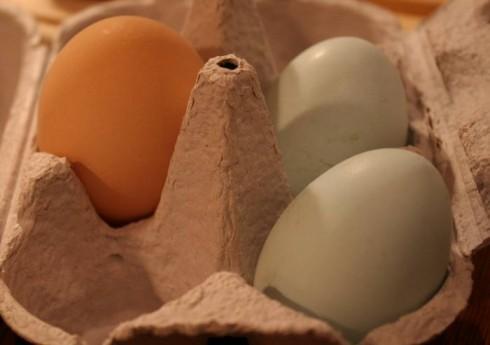 Huevo rubio junto a dos huevos azules
